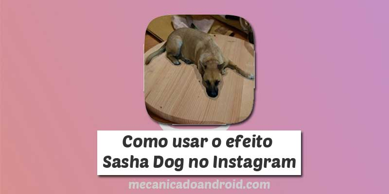 sasha dog instagram